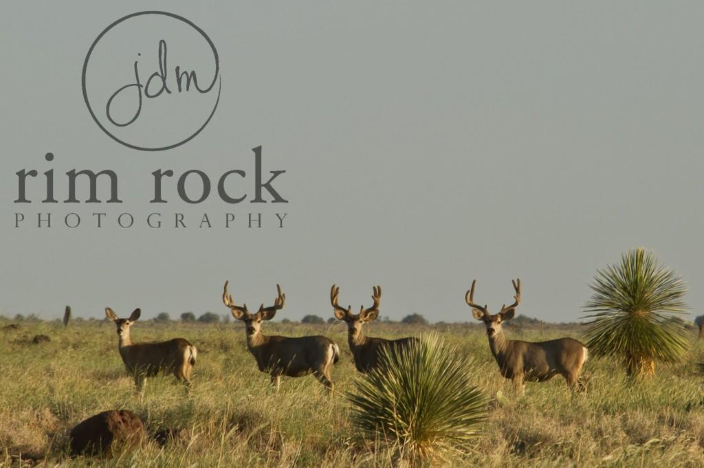 ce miller ranch blog mule deer